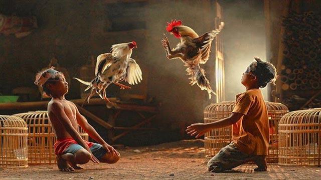 Situs S128 Sabung Ayam Online Indonesia